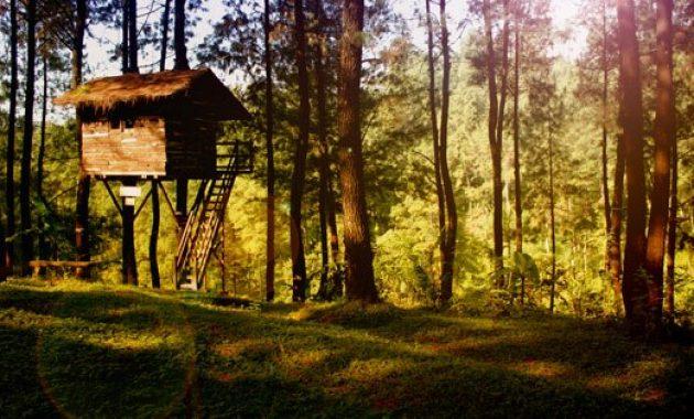 Tempat Wisata Rumah Pohon (The Pines)